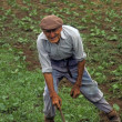 Old Azores Farmer — Stock Photo