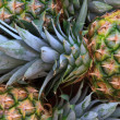 Pineapple — Stockfoto #14322989