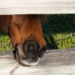 Hungry horse — Stock Photo