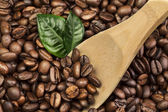 Coffee beans with green leaves and wooden spoon — Stock Photo