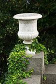 Stone vase with ivy — Stock Photo