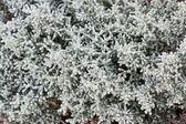 Ornamental texture plants — Stock Photo