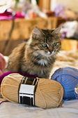 Hem katt med ravel — Stockfoto
