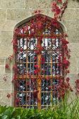 Window in the vine — Stock Photo