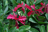 Bay leaf texture — Stock Photo