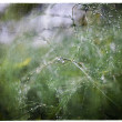 Morning dew on green branch of asparagus leaves — Stock Photo
