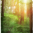 Sunset in the forest — Stock Photo #14926243