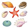Set of  sea shells — Stock Vector