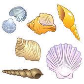Set di conchiglie di mare — Vettoriale Stock
