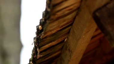 Dirt and moss are found in the wooden roof shingles — Stock Video
