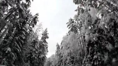 Winter trees covered with snow — Stock Video