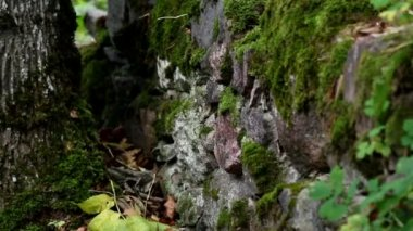 Rock stone wall covered in moss — Stock Video