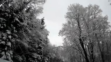 Tall trees on the roadside covered with snow — Vídeo Stock