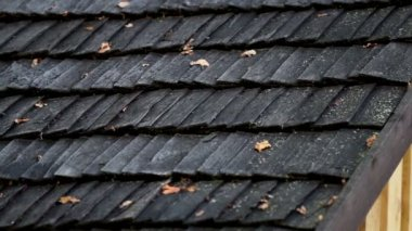 Black cedar wooden roof and some wilted leaves — Stock Video