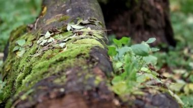 Tree trunk on the ground — Stock Video