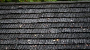 Old black cedar wooden roof with wilted leaves — Stock Video