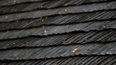Leaves on top of the cedar wooden roof shingles — Stock Video
