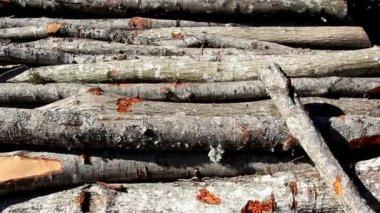 Zestaw firewoods leżącego na ziemi — Wideo stockowe