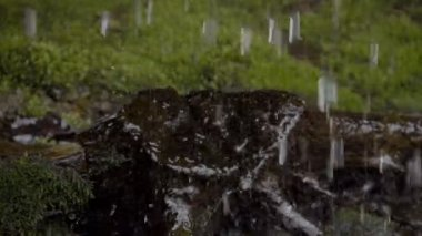Water drops falling on the moss — Vídeo Stock