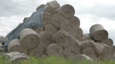 The rolls of hay balls in the field FS700 Odyssey 7Q — Stock Video