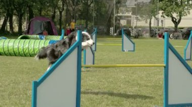 A big dog doing a long jump on the stick  FS700 Odyssey 7Q — Vídeo de Stock