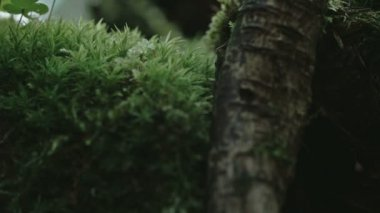 An arachnid crawling on the leaves  FS700 Odyssey 7Q — Vídeo Stock