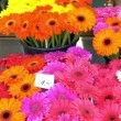 Colorful flowers being displayed on the flower shop GH4 UHD — Stock Video #50855979