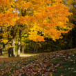 Autumn Colours — Stockfoto #14369989