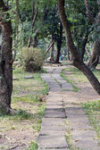 Pathway of the park — Stock Photo