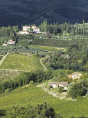 View of a tuscan vinyard — Stock Photo