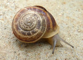 The snail — Stock Photo
