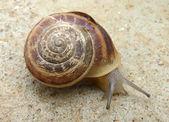 The snail — Stock Photo