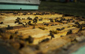Bees working in frames — 图库照片