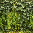 Hedge of leaves — Stock Photo
