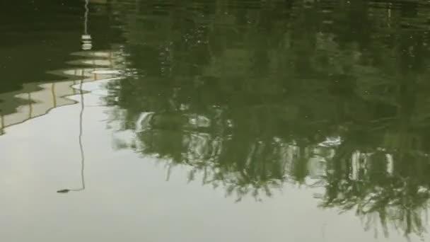 Réflexion sur la rivière — Vidéo