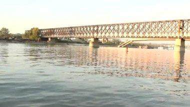 Birds on the river under the bridge — Stock Video