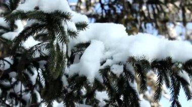 Sneeuw fir tree — Stockvideo