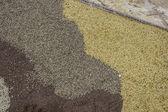 Landbouw zaden — Stockfoto