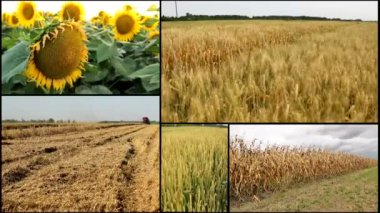 Agricultural fields multiscreen mix — Stock Video