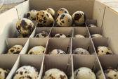 Ovos de codorna — Foto Stock