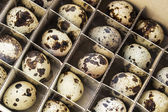 Huevos de codorniz — Foto de Stock