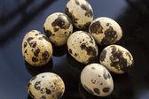 Křepelčí vejce — Stock fotografie