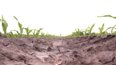 Raw soil grain cereal agricultural plowed field ground raw soil — 图库视频影像