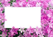 Copy space in flowers — Stock Photo