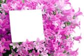 Capy space in flowers — Stock Photo