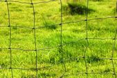 Meadow fence — Stock Photo
