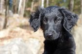 A black puppy dog — Stock Photo