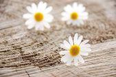 Trzy kwiaty — Zdjęcie stockowe