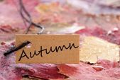 A label with autumn on it — Stock Photo