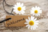 Natural looking label with welcome — Stock Photo